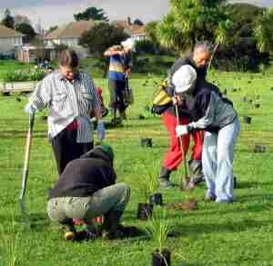 five people with spades digging in plants on green lawn