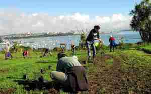 People digging in plants on muddy ground on hill overlooking Auckland City