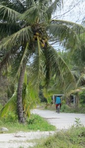 cyclist in blue t-shirt peddling in distance on white road under coconut tree